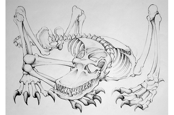Anatomical Drawing of Fictional Creature